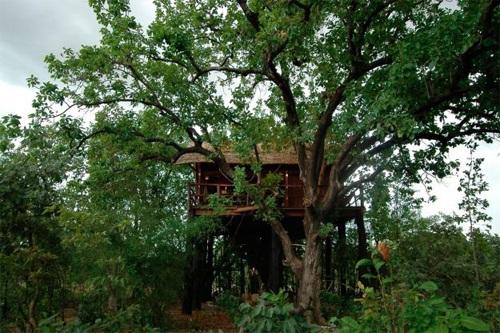 Տուն Հնդկաստանի ջունգլիներում