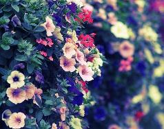 Ծաղիկների աշխարհ